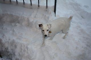 Snow lola